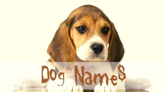Naming Your Male Dog Or Puppy Top Dawg Labs